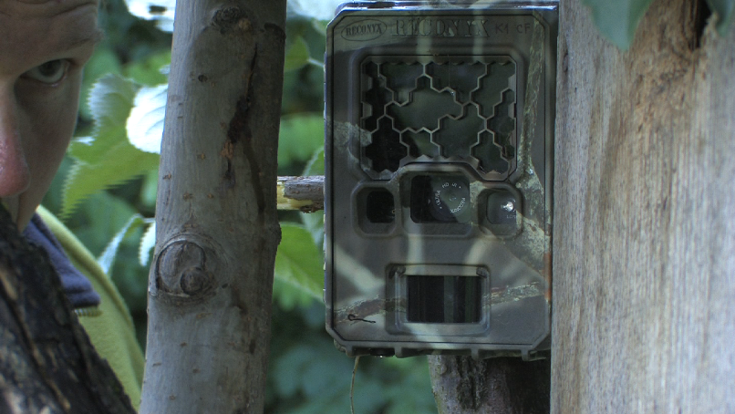 Slika 3: Za snemanje hrane, ki jo starša prineseta mladičem v gnezdo, smo uporabili posebne kamere (foto: Gregor Šubic).