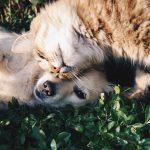 Kastracija psov in mačk